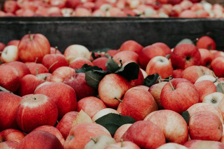 素材コラム第四弾「リンゴから生まれた新素材、アップルスキン」